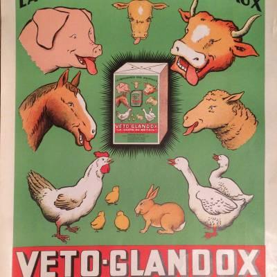 Affiche publicitaire Veto Glandox / aliment pour bétail